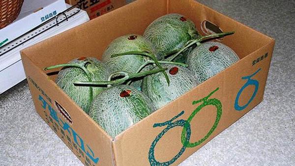7 melon Yubari